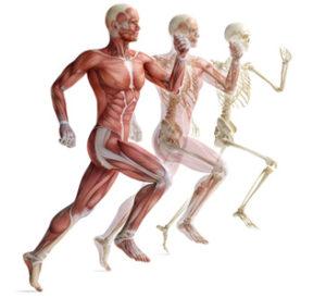 Osteopatia 02 Cuidate Fisioterapia y Estetica