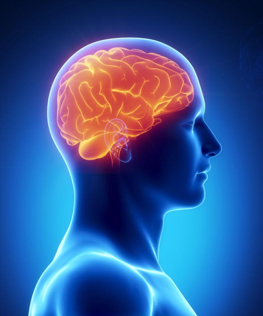 Neuropsicologia 05 Cuidate Fisioterapia y Estetica