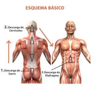 Dolor Sacroiliaco 16 Cuidate Fisioterapia y Estetica